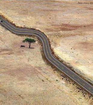 Landsväg kröker sig runt ett träd.