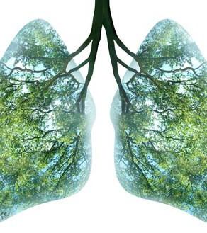 Träd åskådliggjorda som lungor.