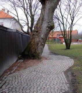 Bild tagen vid Klippans Kulturreservat, Göteborg.