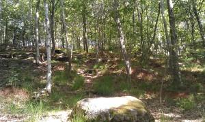 Kålltorp, hotad skog