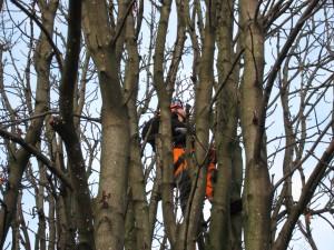 Fortsatta trädingrepp i Allén? Foto: Chris Ceder CC BY 4.0