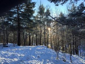 Kålltorps skog