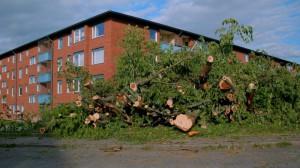 Fällda träd Opaltorget, maj 2016