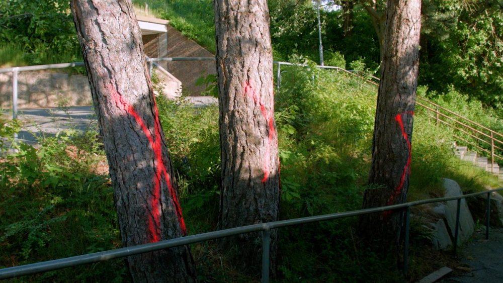 Utmärkta träd Opaltorget