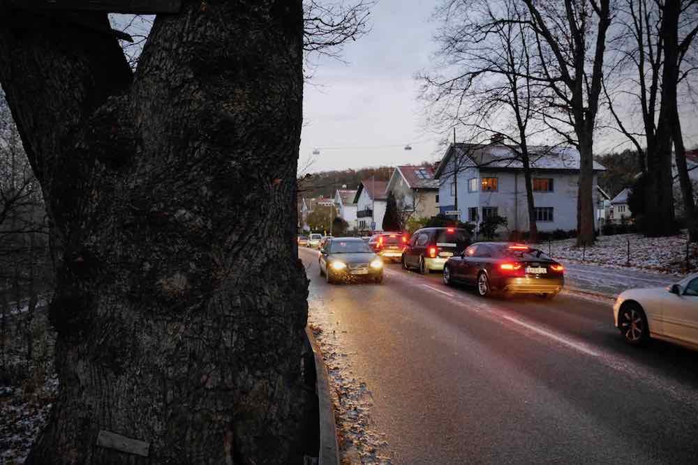 Rusningstrafiken på Delsjövägen på några centimeters avstånd från den minst 500-åriga Gränseken. Foto: Chris Ceder