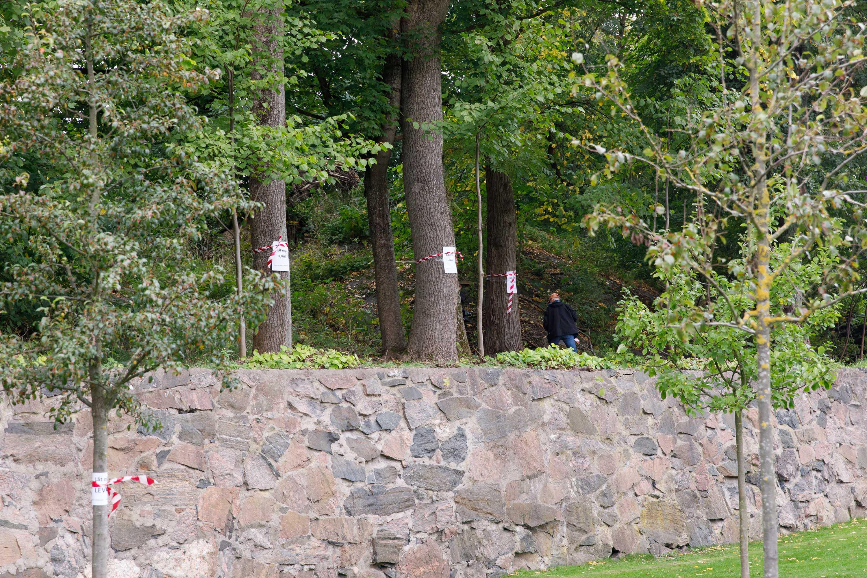 träd vid Korsvägen som hotas av Västlänken