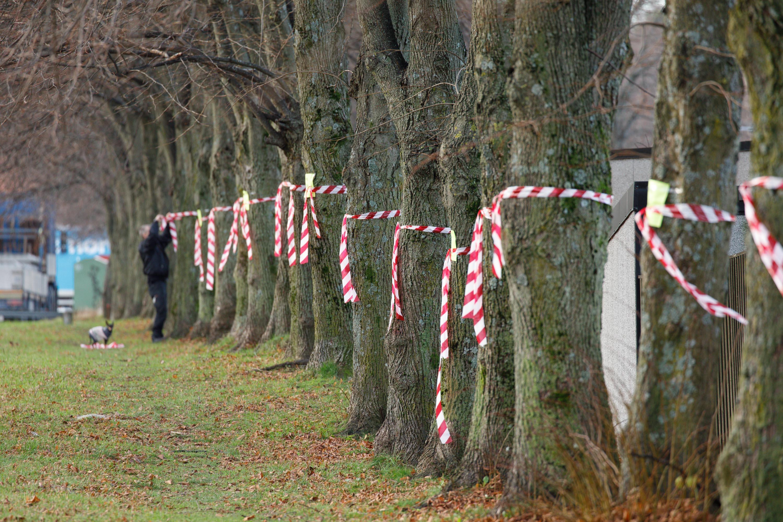 Trädplan räddar träd