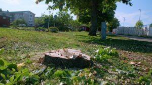 Trädfällning i Kastanjeallén