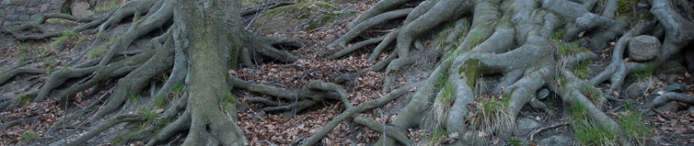 Trädrötter.